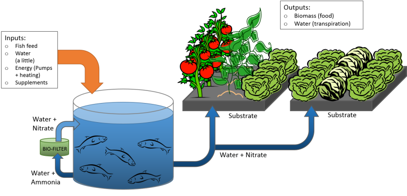 Aquaponics diagram